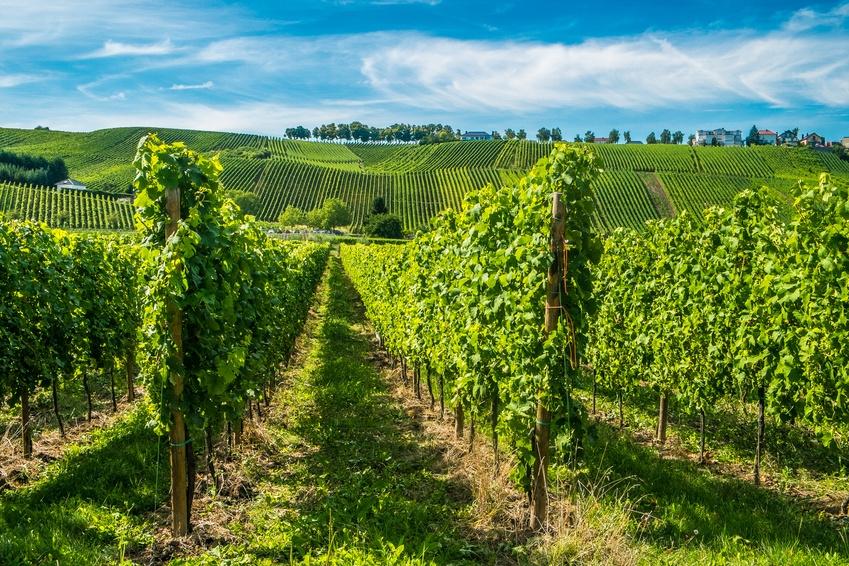 Schönes, gut etabliertes Familienweingut an der Mittelhaardt in der Pfalz zu verkaufen